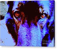 Wolf Eyes Acrylic Print by Nina Kaye