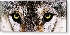 Wolf Eyes By Sharon Cummings Acrylic Print by Sharon Cummings