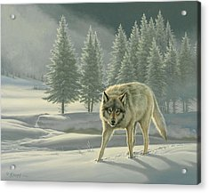Wolf In Fog    Acrylic Print by Paul Krapf