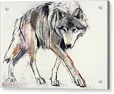 Wolf  Acrylic Print by Mark Adlington