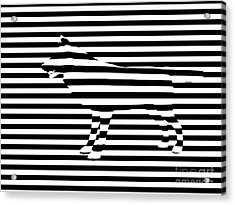Wolf Optical Illusion Acrylic Print by Pixel  Chimp