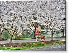 Woman Walking Dog  Rail To Trail Acrylic Print by Dan Friend