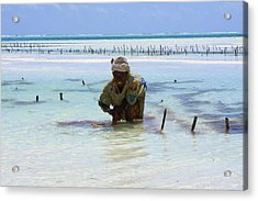 Women Of The Sea Acrylic Print by Aidan Moran