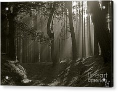 Wonderful Morning Light And Shadows - Giving Thanks To God .    Viewed 231 T Acrylic Print by  Andrzej Goszcz