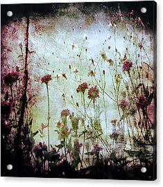 Wonderland Acrylic Print by Trish Mistric