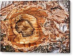 Wood Detail Acrylic Print by Matthias Hauser