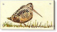 Woodcock Acrylic Print by Juan  Bosco