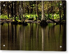 Wooded Reflection Acrylic Print by Karol Livote