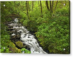 Wooded Stream In The Spring Acrylic Print by Andrew Soundarajan