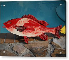 Wooden Red Snapper Acrylic Print by Val Oconnor