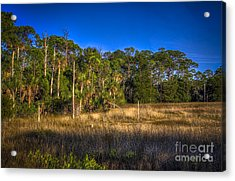 Woodland And Marsh Acrylic Print by Marvin Spates