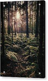 Woodland Trees Acrylic Print by Amanda Elwell