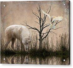 Woodland Wolf Reflected Acrylic Print by Sharon Lisa Clarke