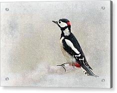 Woodpecker Acrylic Print by Heike Hultsch