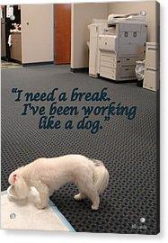 Working Dog Acrylic Print by Mary Beth Landis