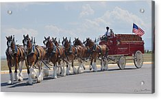 World Renown Clydesdales 2 Acrylic Print by Kae Cheatham