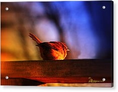 Wren In Early Morning's Light - Featured In In Newbies-nature Wildlife- Comfortable Art Groups Acrylic Print by EricaMaxine  Price