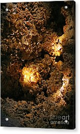 Wulfenite Cave Acrylic Print by Afrodita Ellerman