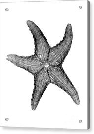 X-ray Of Starfish Acrylic Print by Bert Myers