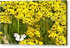 Yellow Afternoon Acrylic Print by Catherine Davies