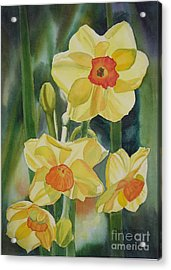 Yellow And Orange Narcissus Acrylic Print by Sharon Freeman