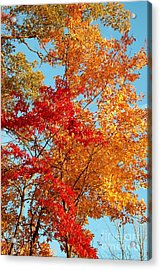 Yellow And Red Acrylic Print by Patrick Shupert