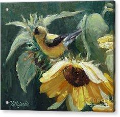 Yellow Bird - Hooded Oriole Acrylic Print by Viktoria K Majestic