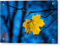 Yellow Blues - Featured 3 Acrylic Print by Alexander Senin