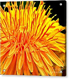 Yellow Chrysanthemum Painting Acrylic Print by Bob and Nadine Johnston