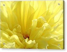 Yellow Dahlia Burst Acrylic Print by Ben and Raisa Gertsberg