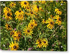 Yellow Daisies In Tall Grass Prairie Madison County Iowa Acrylic Print by Robert Ford