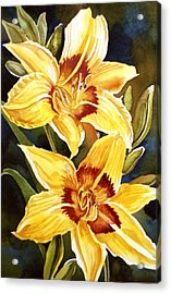 Yellow Daylilies Acrylic Print by Alfred Ng
