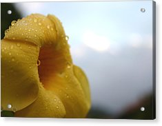 Yellow Droplets 2 Acrylic Print by Frederico Borges