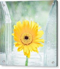Yellow Flower Acrylic Print by Tom Gowanlock