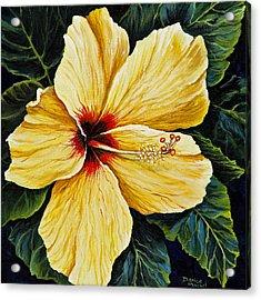 Yellow Hibiscus Acrylic Print by Darice Machel McGuire