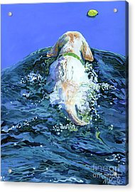 Yellow Lab  Blue Wake Acrylic Print by Molly Poole