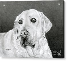 Yellow Labrador Retriever- Bentley Acrylic Print by Sarah Batalka