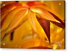 Yellow Leaves At Dawn Acrylic Print by Deb Halloran