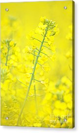 Yellow Makes Me Happy Acrylic Print by Angela Doelling AD DESIGN Photo and PhotoArt