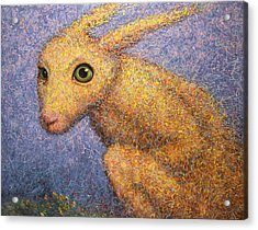 Yellow Rabbit Acrylic Print by James W Johnson