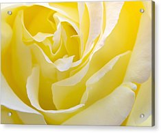 Yellow Rose Acrylic Print by Svetlana Sewell