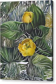Yellow Waterlilies Acrylic Print by Alfred Ng