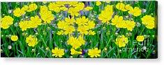Yellow Wild Flowers Acrylic Print by Jon Neidert