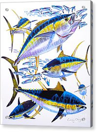 Yellowfin Run Acrylic Print by Carey Chen
