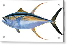 Yellowfin Tuna Acrylic Print by Carey Chen