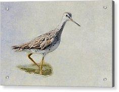Yellowlegs Acrylic Print by Bill Wakeley