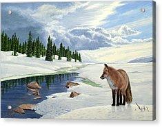 Yellowstone Fox Acrylic Print by Paul Krapf