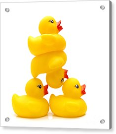 Yelow Ducks Acrylic Print by Bernard Jaubert
