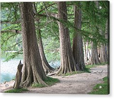 Yesterday's Trees Acrylic Print by Wendy J St Christopher