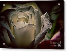 You Light Up My Life Acrylic Print by Patricia Trudell